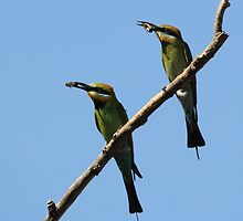My Honey and A Bee ~ Bee Eaters ~ by Kym Bradley