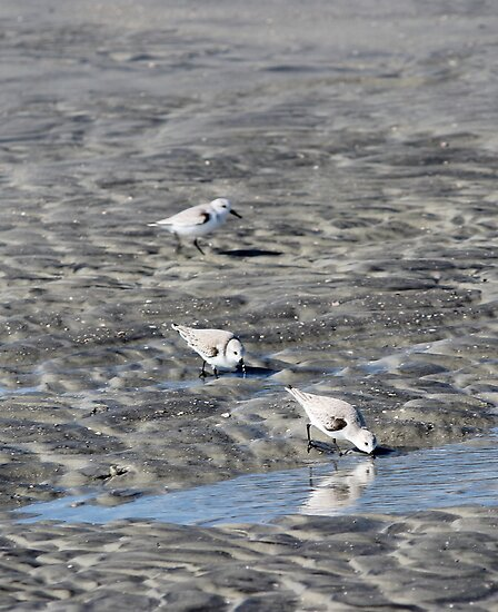 Sand Pipers by LightFootsteps