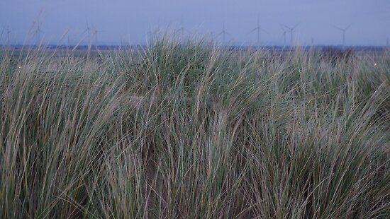 Camber Sands to Romney Marsh by seymourpics
