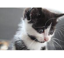 Kitten portraits 4 Photographic Print