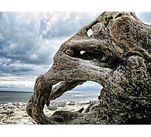 Driftwood  1-  Monmouth Beach, Lyme , Dorset Photographic Print