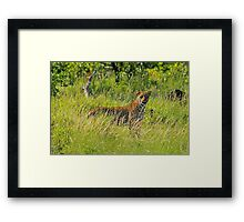 Caught in the open! Framed Print