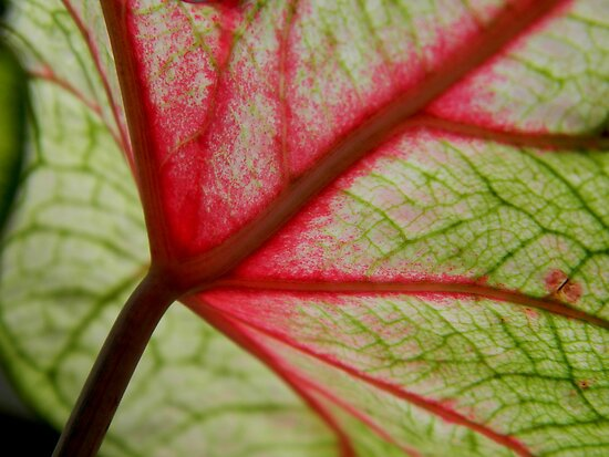 Leaf Abstract - Veins of Life by ctheworld