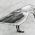 Seagull by urbanmonk