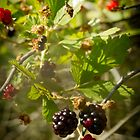 Berries in the Evening by MsMelStevens
