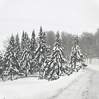 Winter Wonderland Parc Oméga by Poete100