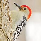Woodpecker on a Gray Winter's Day by lorilee