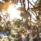 Through the Branches by AbigailJoy