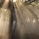 ~ Sun Beams ~ by LeeoPhotography