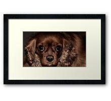 Those Puppy Dog Eyes Framed Print