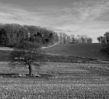 Redhill Fields by Phil Howcroft