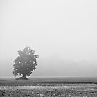 Silent Tree by ivynev