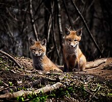 A Pair of Cute Kit Foxes 3 by Thomas Young
