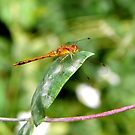 Dragonfly Six-point Landing by mussermd