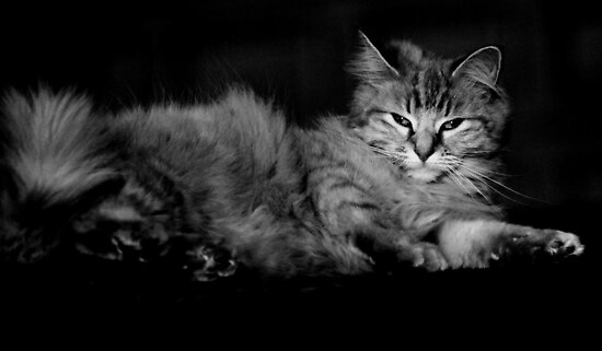 Juniper cat by Clare Colins