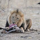 Kalahari Lion Grasslands Camp - Predator Project by vawtjwphoto