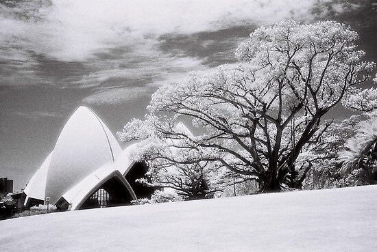 Majestic Tree by AndyFeltonPix