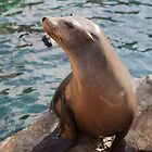 Sea Lion by nickdeclercq