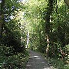Woodland Pathway by Catherine Longhurst