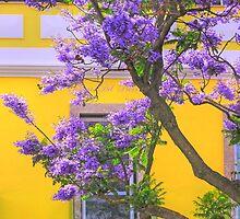 jacaranda by terezadelpilar~ art & architecture