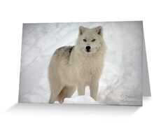 The Arctic Wolf Greeting Card