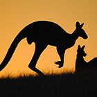 Kangaroo at Sunset - Whittlesea, Victoria by Heather Samsa