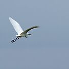 Great White Egret flying away by Sue Robinson