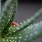 Cactus by PMJCards