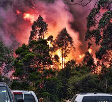 Bush Fire by Sharon Brown