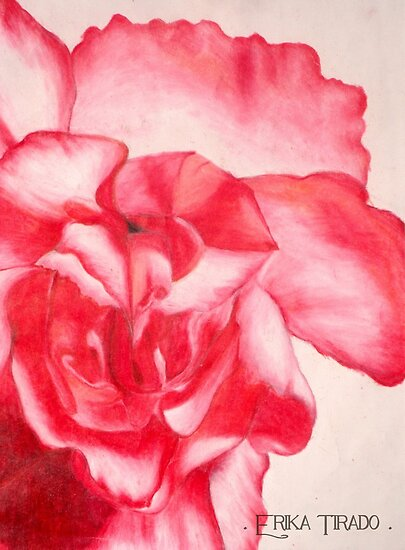 anatomy of a carnation by Erika Tirado