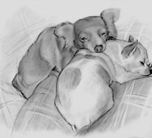 Sleepy cute dogs by Joerg Buettner