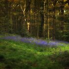 Bluebells in Roundhay Park (HDR) by Tim Waters