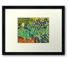 Irises, Vincent van Gogh Framed Print