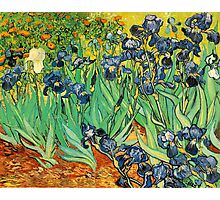 Irises, Vincent van Gogh Photographic Print