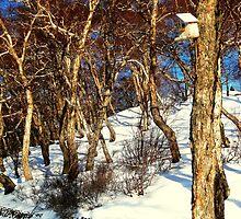 A Birds' House on Nikolskaya Hill, Petropavlovsk, Kamchatka, Russia.  by Igor Pozdnyakov