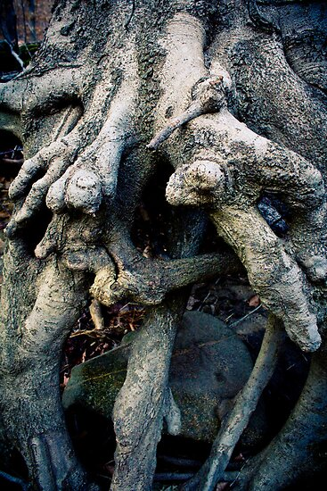 Old Man's Knotted Tree : View 2 by bcboscia410