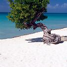 Lone Tree on a Beach by George Oze