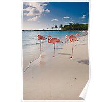 Flamingos on a Beach Poster