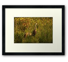 Sandhill Cranes on shore of Lake Framed Print