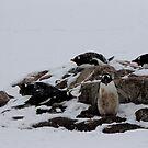 Penguin 017 by Karl David Hill