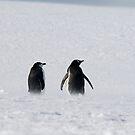 Penguin 019 by Karl David Hill