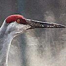 Sandhill Cranes by Thomas Murphy