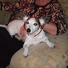 jack russel with raindeer ears on by Ryanpk