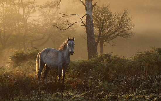 The New Forest pony by Gary Richardson
