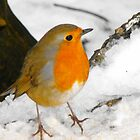 Winter Snow Robin by kelly-m-wall