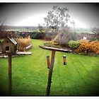 Back garden view by rkdownton