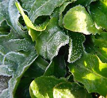 New Year Frost, 3 by Alice Schuerman