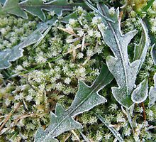 New Year Frost, 4 by Alice Schuerman