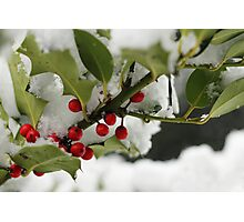 Holly & Snow Photographic Print