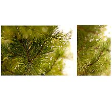 Pine needle with dewdrops in morning Photographic Print